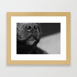 Poppy Nose Framed Art Print