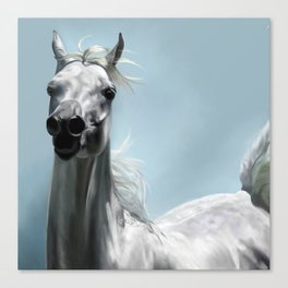 Arabian White Horse Painting Canvas Print