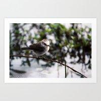 Birds from Pantanal  Chimbum Art Print