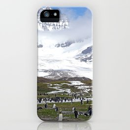 King Penguins at St. Andrew's Bay iPhone Case
