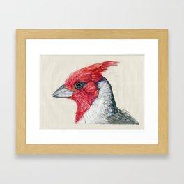 Cardenal de cresta roja Framed Art Print