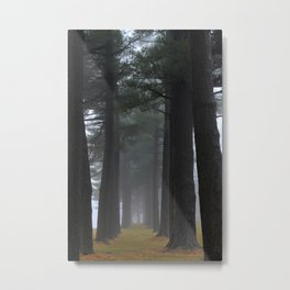 Foggy pines Metal Print