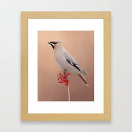 Waxwing with Berries Framed Art Print