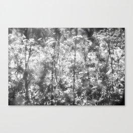 Wild wild flowers Canvas Print