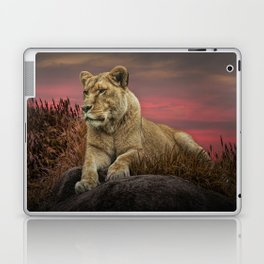 African Female Lion in the Grass at Sunset Laptop & iPad Skin