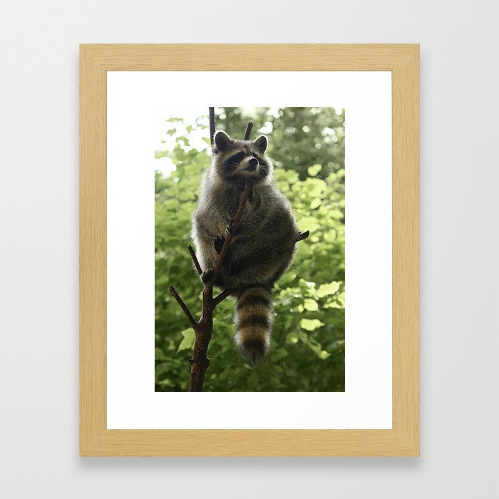 Kung Fu Raccoon Framed Art Print