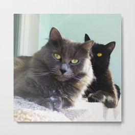 Lovers. Cats. Metal Print