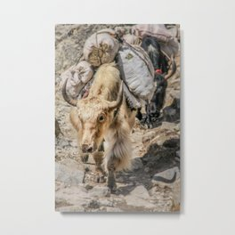 Loaded Yak Metal Print