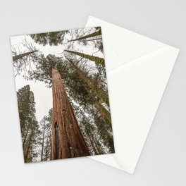 Sequoia Stretch - Nature Photography Stationery Cards