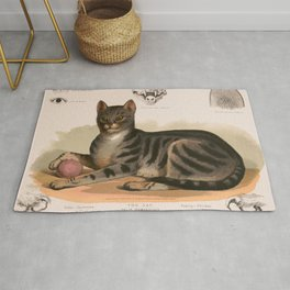 Anatomy of the house cat Rug