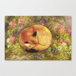 The Cozy Fox Canvas Print