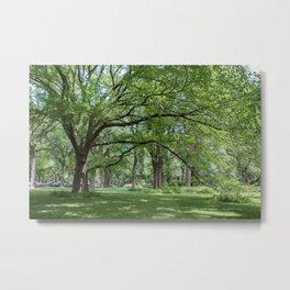Elm Trees Metal Print