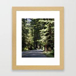 Humboldt State Park Road Framed Art Print