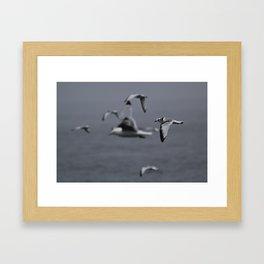 Kittiwake Framed Art Print
