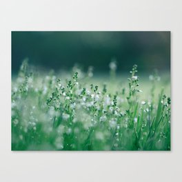 Misty view of dew on wild plants in the meadow Canvas Print