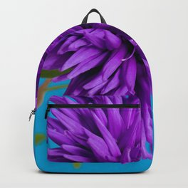 Close-up image of the flower Aster on blue background. Shallow depth of field. Backpack