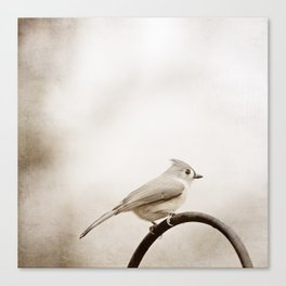 Tufted Titmouse Bird Photography, Neutral Birds Nature Photograph Canvas Print