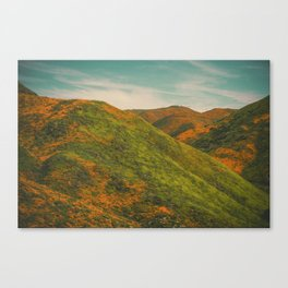 California Poppies 037 Canvas Print