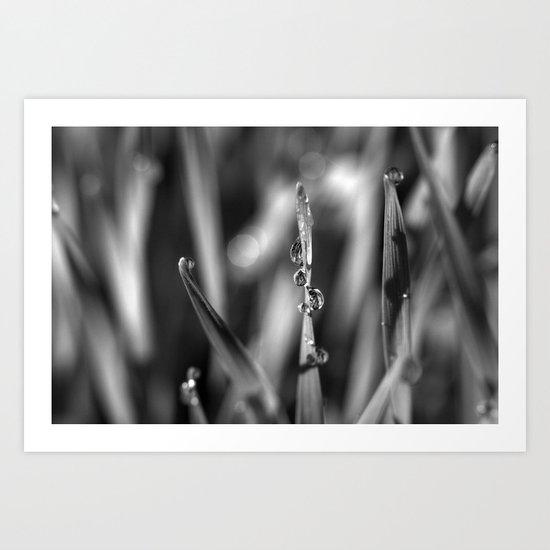 Morning dew Black&white 8548  Art Print