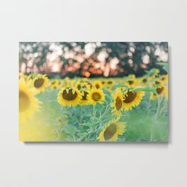 Sunflowers and Sunsets Metal Print