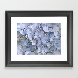 Blue Hydrangeas Framed Art Print