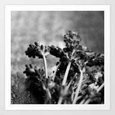 Lavender (Black & White) Art Print