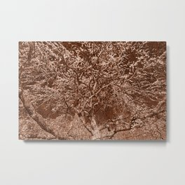Wooden Cherry Blossom Impressions Metal Print