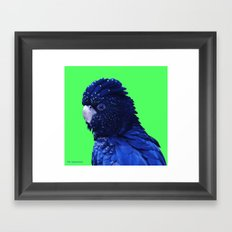 Red Tailed Cockatoo Framed Art Print