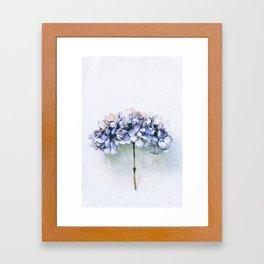Delicate Hydrangea Framed Art Print