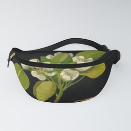 Pyrus Communis Mary Delany Delicate Paper Flower Collage Black Background Floral Botanical Fanny Pack