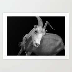 black goat Art Print