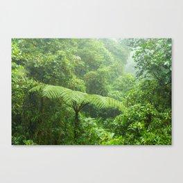 Misty rainforest in Monteverde cloud forest reserve Canvas Print