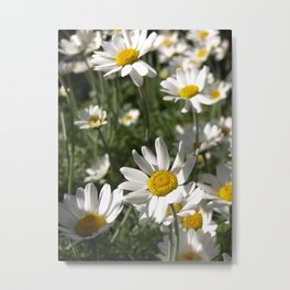 SUN WORSHIPPING DAISY FLOWERS Metal Print