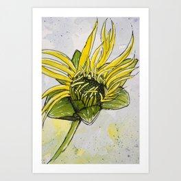 Budding Cup Plant Flower Art Print
