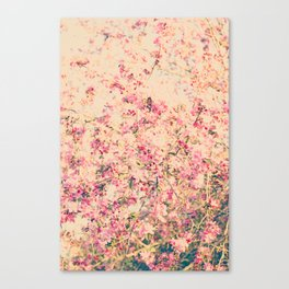 Vintage Pink Crabapple Tree Blossoms in the Sun Canvas Print