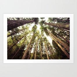 The Canopy Art Print