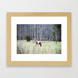Grazing Horse Framed Art Print