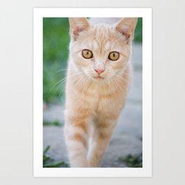 Esmeralda The Kitty Art Print