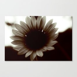 Dark Sun-Flower Canvas Print