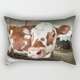 Calf in stalls at farm Rectangular Pillow