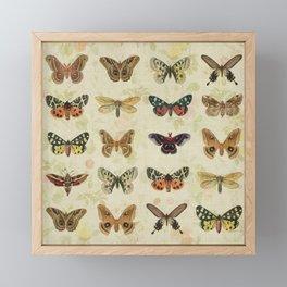 Moths & Butterflies Framed Mini Art Print