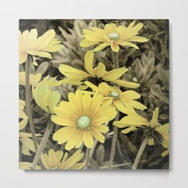 Yellow Daisy flower Sepia Country Rustic Decor Farmhouse Art A219 Metal Print
