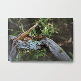 A Lubber in the Slough II Metal Print