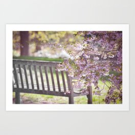 Spring Bench Art Print