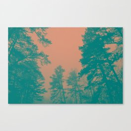 Trees & Mist Canvas Print