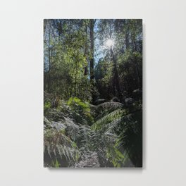 Rainforest Walk Metal Print