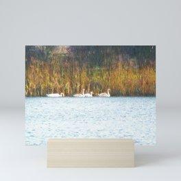 Swans in Autumn Mini Art Print