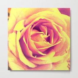 Yellow and Pink Rose Metal Print