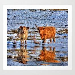 Sarah & Hamish - Highland Cattle Art Print