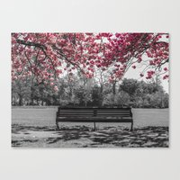 cherry blossom Canvas Prints featuring Cherry Blossom by Claire Doherty